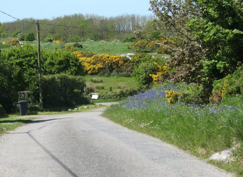 Flowery roadside verge by Kenyon Cottage Rhosgoch geograph org uk 1306864