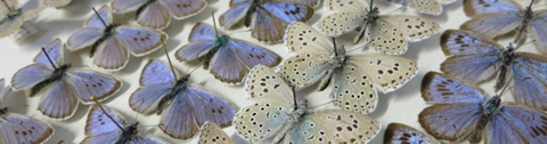 2 Butterfly Picture